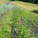 Plantes du Puits des Fées
