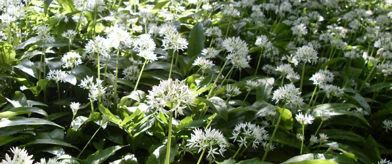 Contact Producteurs de plantes aromatiques et médicinales des Savoie