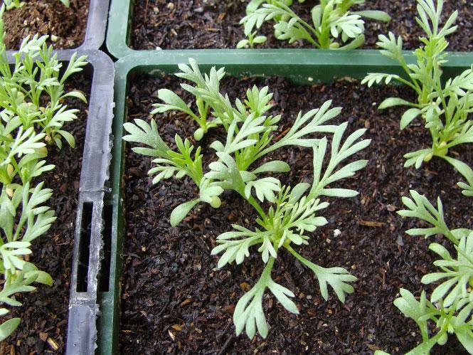 Producteurs de plantes des savoie art misiane for Site de vente de plantes