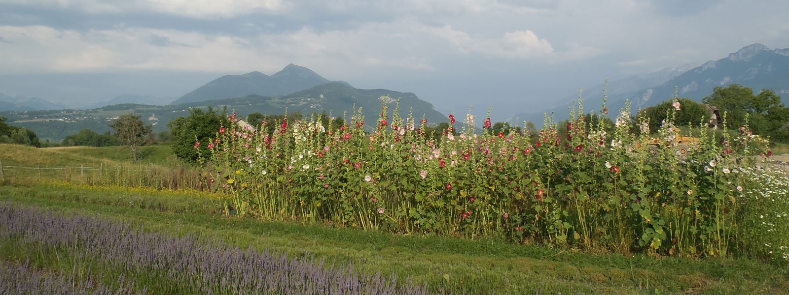 Producteurs de plantes aromatiques et médicinales des Savoie