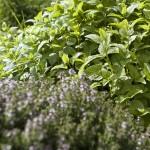 Les Jardins d'Amélie Blanche