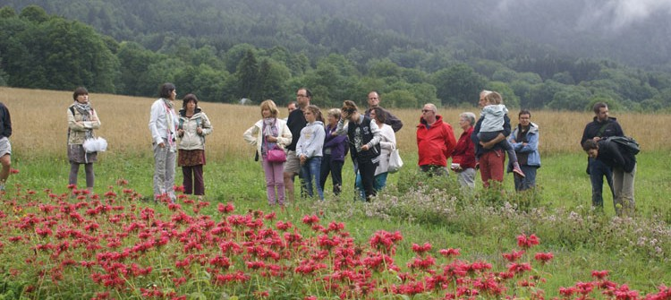 Visites des exploitations de plantes aromatiques et médicinales